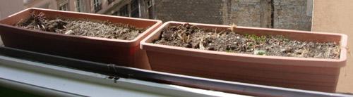 Les jardinières avant l'opération