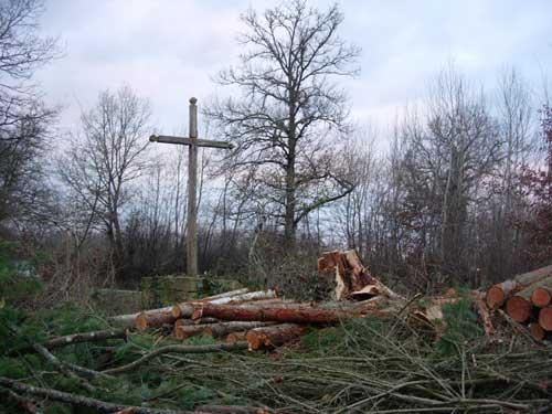 croix-arbres