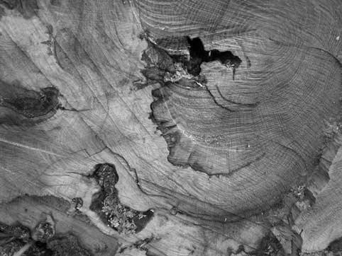 Vases communicants «Lignes de vie et arbres» avec Jean-Yves Fick